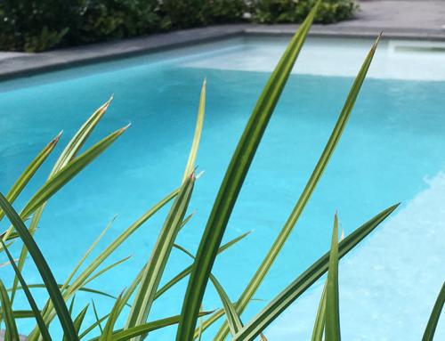 Zwemmen in glashelder water